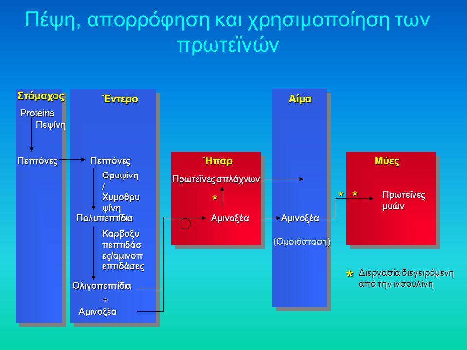 Πέψη, απορρόφηση και χρησιμοποίηση των πρωτεϊνών Στόμαχος Έντερο Ήπαρ Αίμα * Διεργασία διεγειρόμενη από την ινσουλίνη Proteins Πεπτόνες Πεψίνη Πεπτόνε
