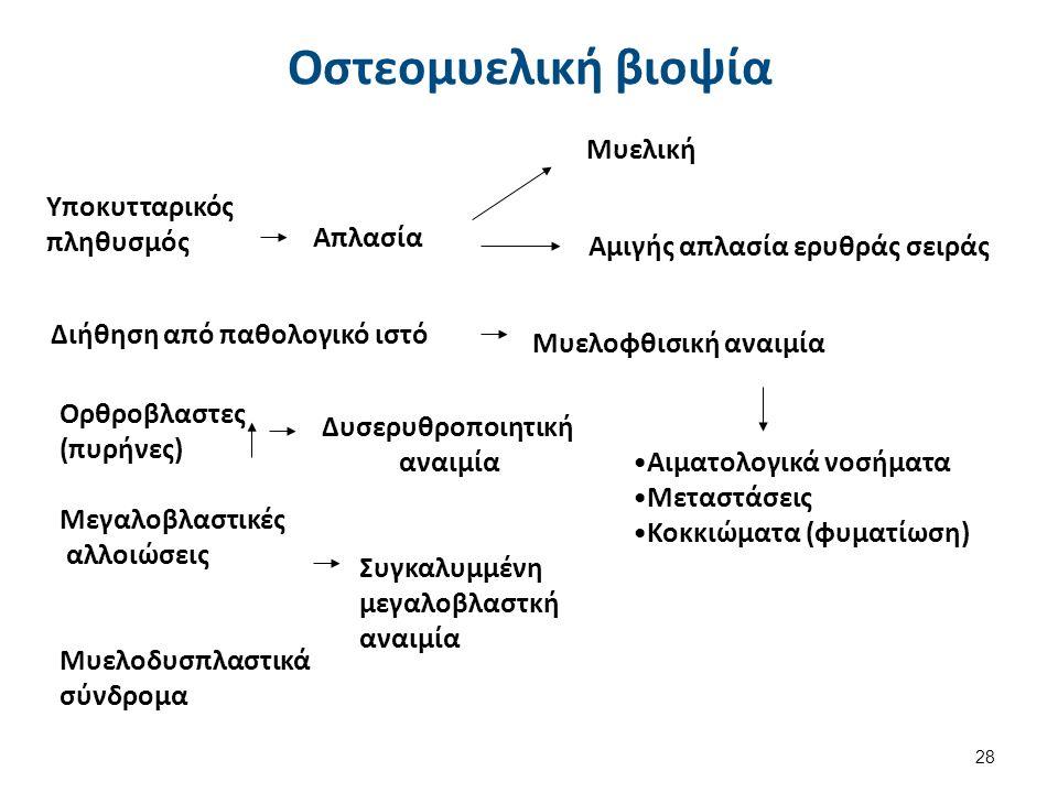 Υποκυτταρικόςπληθυσμός Απλασία Διήθηση από παθολογικό ιστό Ορθροβλαστες(πυρήνες) Δυσερυθροποιητικήαναιμία Συγκαλυμμένημεγαλοβλαστκήαναιμία Μυελοφθισικ