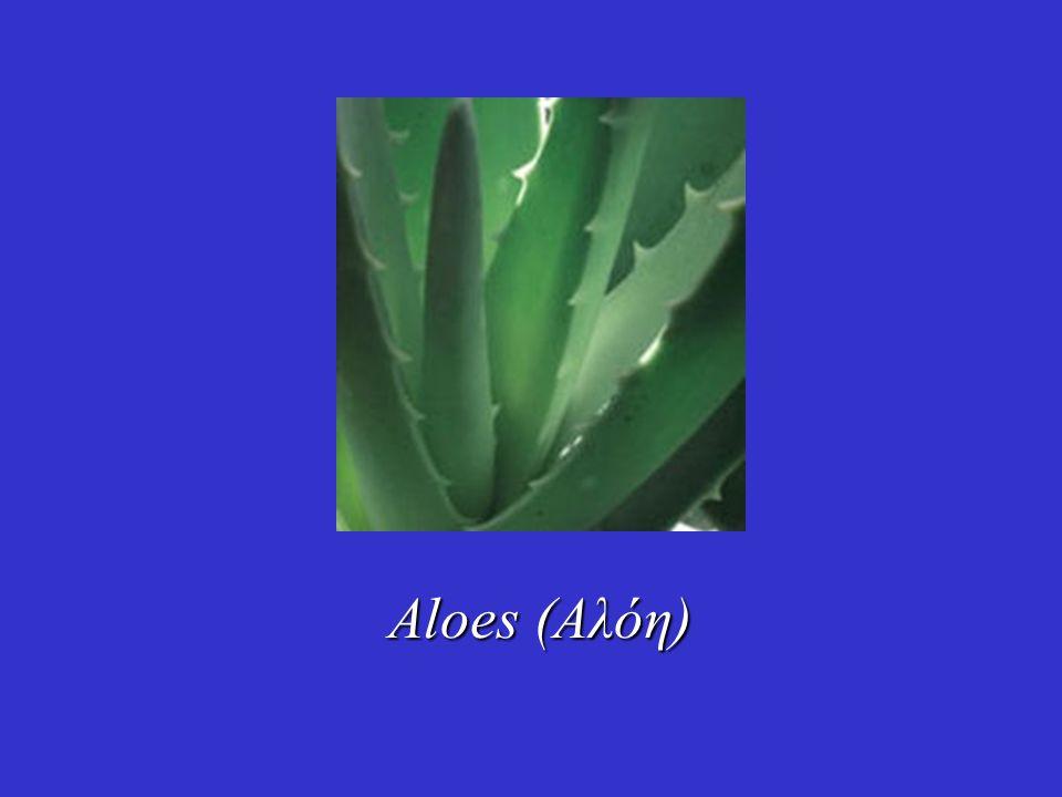 Aloes (Αλόη)