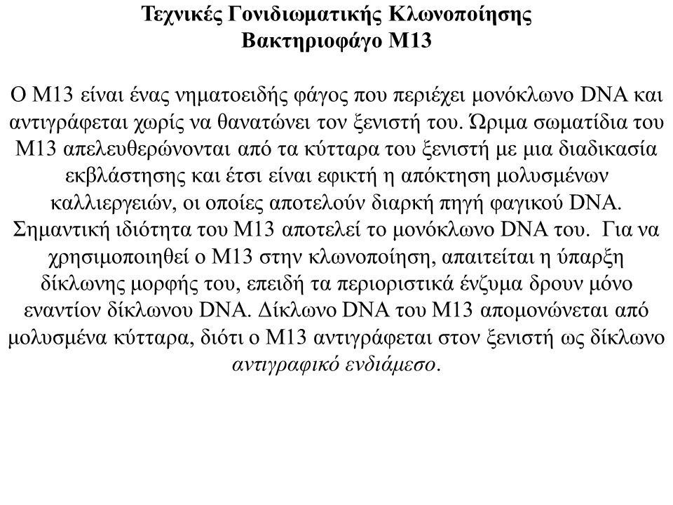 Τεχνικές Γονιδιωματικής Κλωνοποίησης Βακτηριοφάγο Μ13 Ο Μ13 είναι ένας νηματοειδής φάγος που περιέχει μονόκλωνο DNA και αντιγράφεται χωρίς να θανατώνε