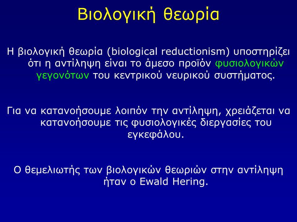 Βιολογική θεωρία Η βιολογική θεωρία (biological reductionism) υποστηρίζει ότι η αντίληψη είναι το άμεσο προϊόν φυσιολογικών γεγονότων του κεντρικού νευρικού συστήματος.