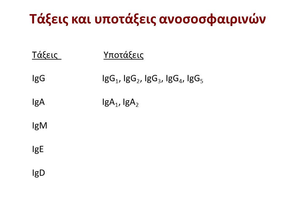 Τάξεις Υποτάξεις IgG IgG 1, IgG 2, IgG 3, IgG 4, IgG 5 IgA IgA 1, IgA 2 IgM IgE IgD Τάξεις και υποτάξεις ανοσοσφαιρινών
