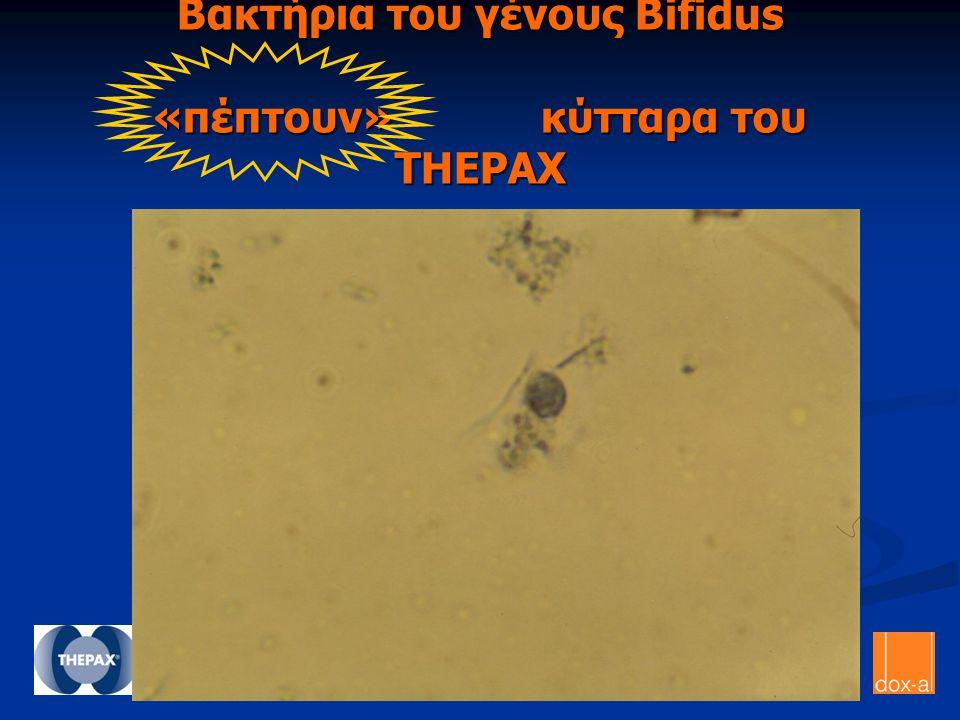 Βακτήρια του γένους Bifidus «πέπτουν» κύτταρα του THEPAX