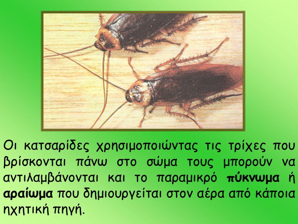 Οι κατσαρίδες χρησιμοποιώντας τις τρίχες που βρίσκονται πάνω στο σώμα τους μπορούν να αντιλαμβάνονται και το παραμικρό πύκνωμα ή αραίωμα που δημιουργείται στον αέρα από κάποια ηχητική πηγή.