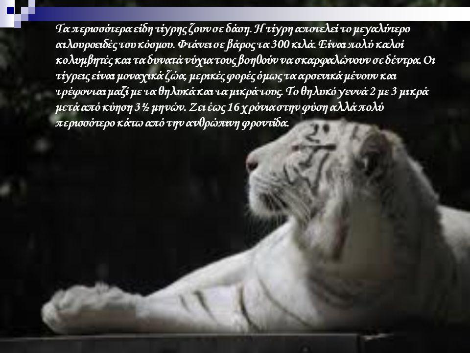 Τα περισσότερα είδη τίγρης ζουν σε δάση. Η τίγρη αποτελεί το μεγαλύτερο αιλουροειδές του κόσμου. Φτάνει σε βάρος τα 300 κιλά. Είναι πολύ καλοί κολυμβη