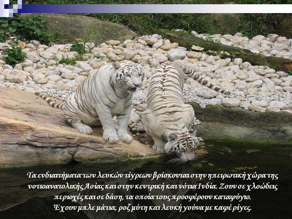 Τα ενδιαιτήματα των λευκών τίγρεων βρίσκονται στην ηπειρωτική χώρα της νοτιοανατολικής Ασίας και στην κεντρική και νότια Ινδία. Ζουν σε χλοώδεις περιο