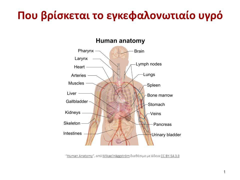 """Που βρίσκεται το εγκεφαλονωτιαίο υγρό 1 """"Human Anatomy"""", από Mikael Häggström διαθέσιμο με άδεια CC BY-SA 3.0Human AnatomyMikael HäggströmCC BY-SA 3.0"""