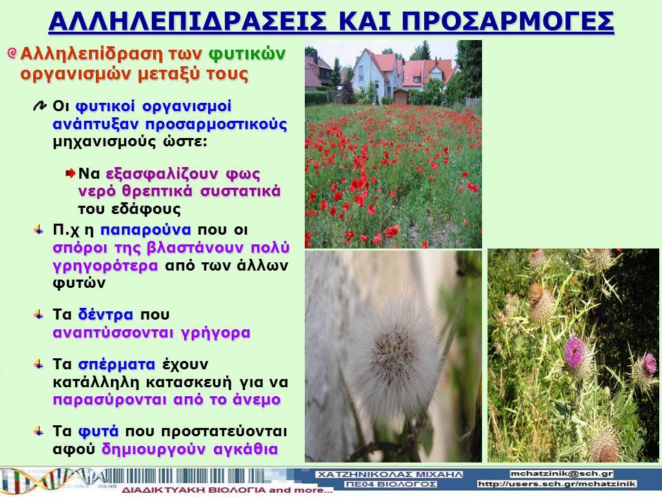 ΑΛΛΗΛΕΠΙΔΡΑΣΕΙΣ ΚΑΙ ΠΡΟΣΑΡΜΟΓΕΣ Αλληλεπίδραση των φυτικών οργανισμών μεταξύ τους φυτικοί οργανισμοί ανάπτυξαν προσαρμοστικούς Οι φυτικοί οργανισμοί ανάπτυξαν προσαρμοστικούς μηχανισμούς ώστε: εξασφαλίζουν φως νερό θρεπτικά συστατικά Να εξασφαλίζουν φως νερό θρεπτικά συστατικά του εδάφους παπαρούνα σπόροι της βλαστάνουν πολύ γρηγορότερα Π.χ η παπαρούνα που οι σπόροι της βλαστάνουν πολύ γρηγορότερα από των άλλων φυτών δέντρα αναπτύσσονται γρήγορα Τα δέντρα που αναπτύσσονται γρήγορα σπέρματα παρασύρονται από το άνεμο Τα σπέρματα έχουν κατάλληλη κατασκευή για να παρασύρονται από το άνεμο φυτά δημιουργούν αγκάθια Τα φυτά που προστατεύονται αφού δημιουργούν αγκάθια