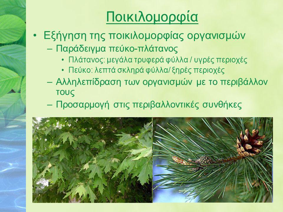 Ποικιλομορφία Εξήγηση της ποικιλομορφίας οργανισμών –Παράδειγμα πεύκο-πλάτανος Πλάτανος: μεγάλα τρυφερά φύλλα / υγρές περιοχές Πεύκο: λεπτά σκληρά φύλ
