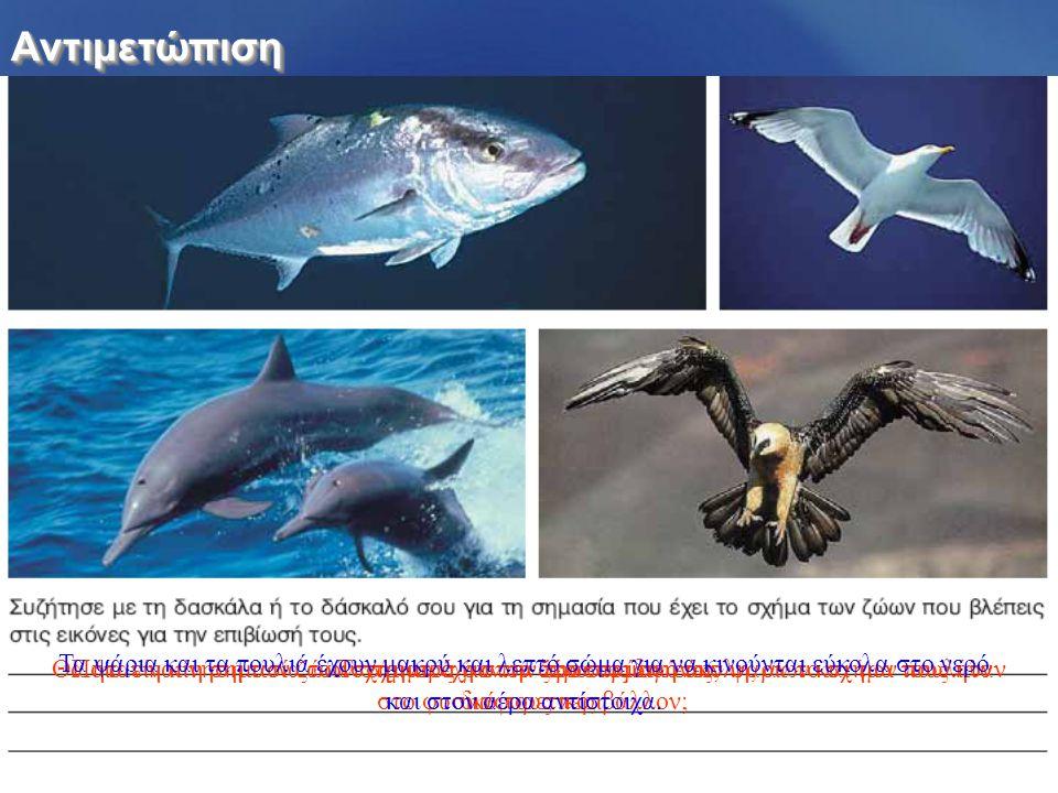 ΑντιμετώπισηΑντιμετώπιση Τι σχήμα έχουν τα ζώα στις εικόνες;Θα ήταν η κίνηση των ζώων στο νερό ή στον αέρα το ίδιο εύκολη, αν το σχήμα τους ήταν διαφο