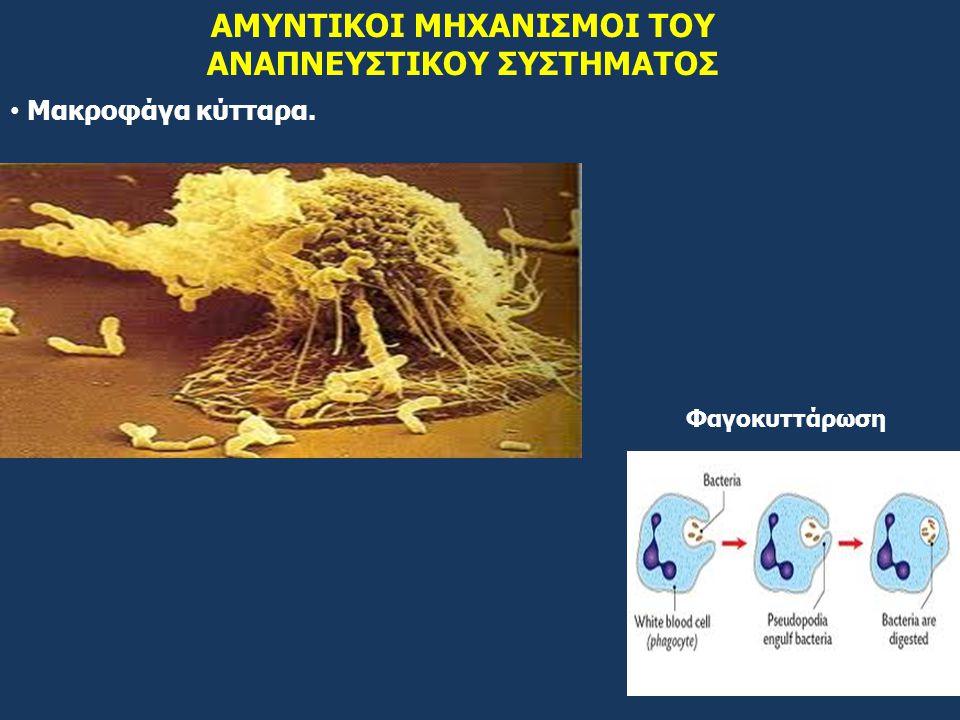 ΑΜΥΝΤΙΚΟΙ ΜΗΧΑΝΙΣΜΟΙ ΤΟΥ ΑΝΑΠΝΕΥΣΤΙΚΟΥ ΣΥΣΤΗΜΑΤΟΣ Μακροφάγα κύτταρα. Φαγοκυττάρωση