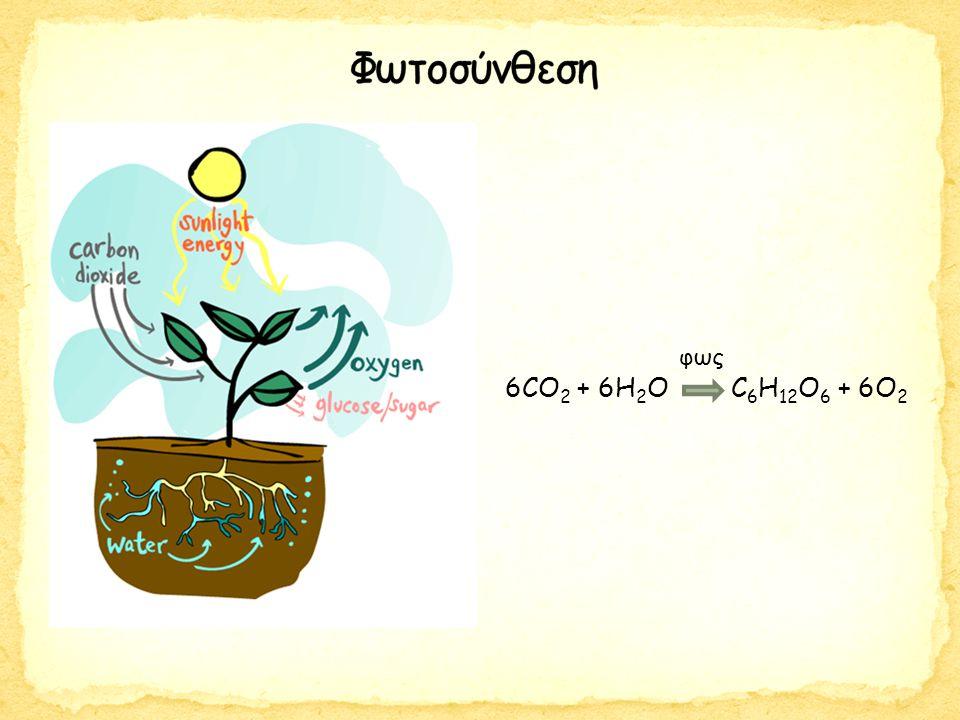 6CO 2 + 6H 2 O → C 6 H 12 O 6 + 6O 2 φως