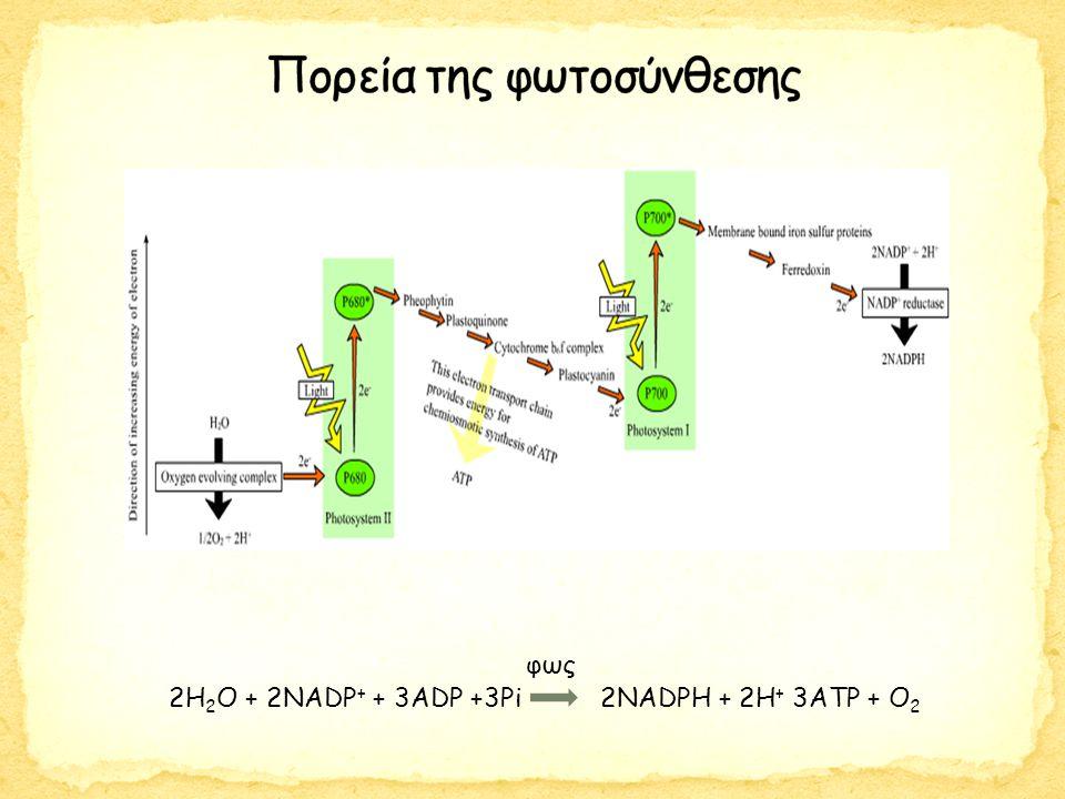 2Η 2 Ο + 2ΝΑDP + + 3ADP +3Pi 2NADPH + 2H + 3ATP + O 2 φως