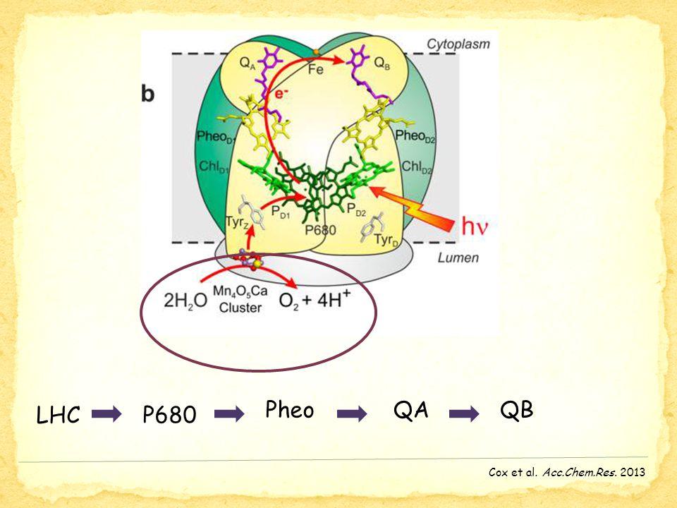 Cox et al. Acc.Chem.Res. 2013 LHCP680 PheoQAQB
