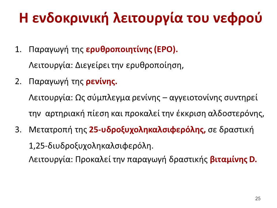 Η ενδοκρινική λειτουργία του νεφρού 1.Παραγωγή της ερυθροποιητίνης (EPO). Λειτουργία: Διεγείρει την ερυθροποίηση, 2.Παραγωγή της ρενίνης. Λειτουργία: