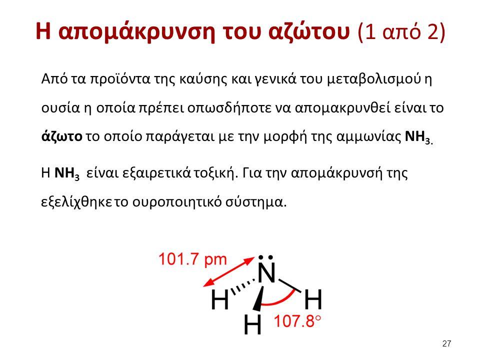 H απομάκρυνση του αζώτου (1 από 2) Από τα προϊόντα της καύσης και γενικά του μεταβολισμού η ουσία η οποία πρέπει οπωσδήποτε να απομακρυνθεί είναι το ά