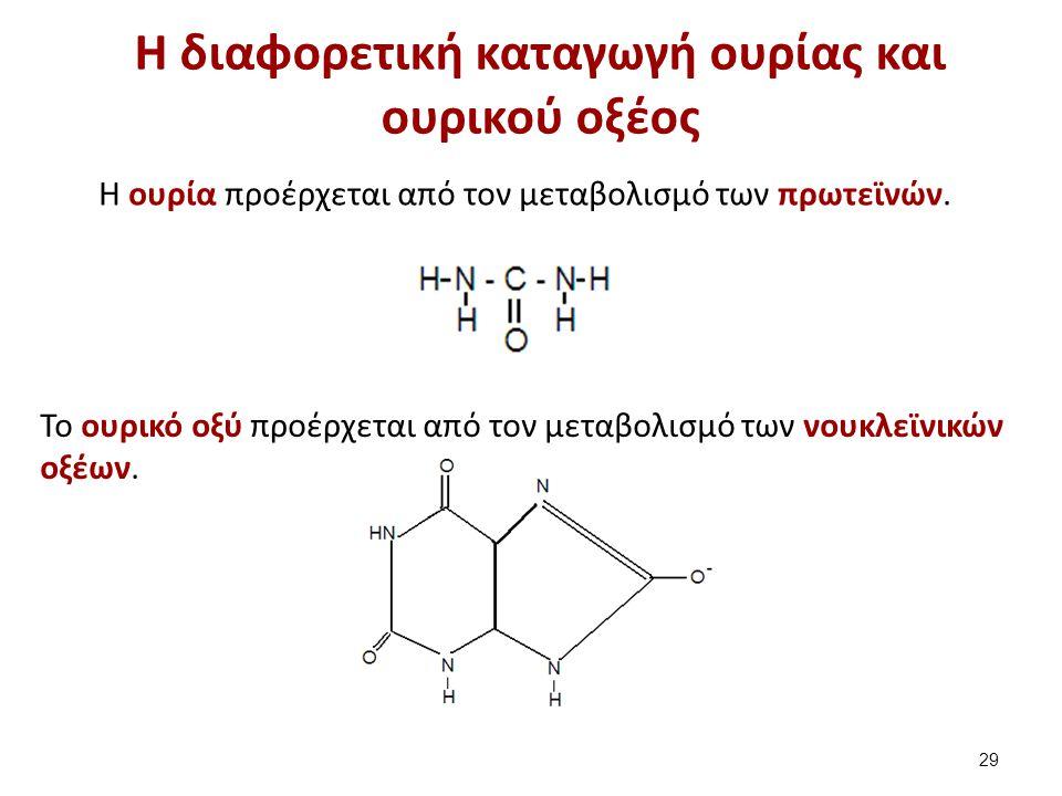 H διαφορετική καταγωγή ουρίας και ουρικού οξέος Η ουρία προέρχεται από τον μεταβολισμό των πρωτεϊνών. Το ουρικό οξύ προέρχεται από τον μεταβολισμό των