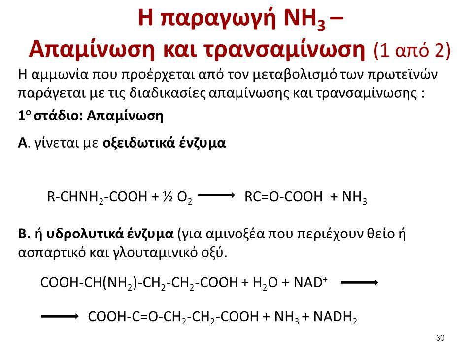 Η παραγωγή NH 3 – Απαμίνωση και τρανσαμίνωση (1 από 2) Η αμμωνία που προέρχεται από τον μεταβολισμό των πρωτεϊνών παράγεται με τις διαδικασίες απαμίνω