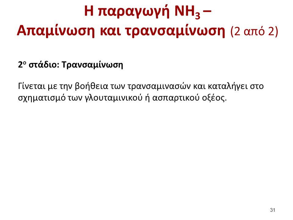 Η παραγωγή NH 3 – Απαμίνωση και τρανσαμίνωση (2 από 2) 2 o στάδιο: Τρανσαμίνωση Γίνεται με την βοήθεια των τρανσαμινασών και καταλήγει στο σχηματισμό