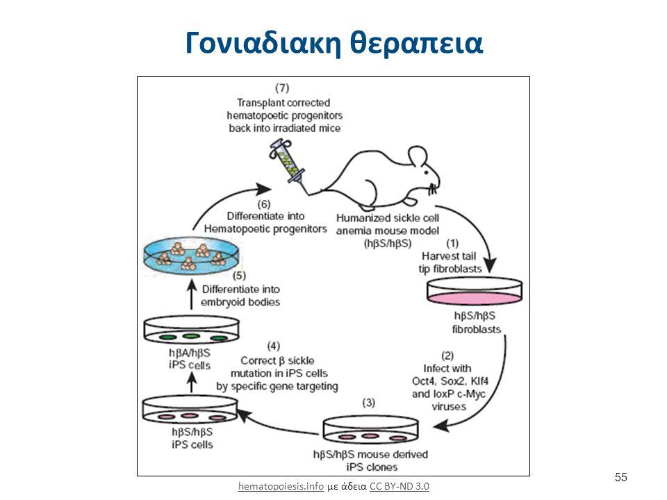 Γονιαδιακη θεραπεια hematopoiesis.infohematopoiesis.info με άδεια CC BY-ND 3.0CC BY-ND 3.0 55
