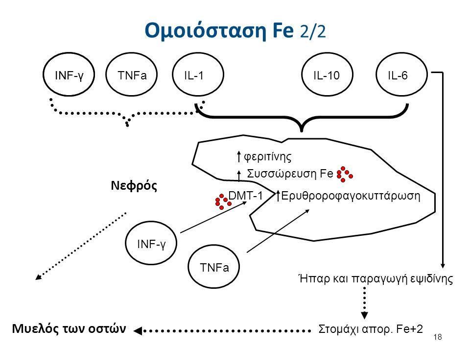 INF-γ TNFaIL-1IL-10IL-6 φεριτίνης Συσσώρευση Fe Ερυθροροφαγοκυττάρωση INF-γ DMT-1 TNFa Ήπαρ και παραγωγή εψιδίνης Στομάχι απορ. Fe+2 Ομοιόσταση Fe 2/2