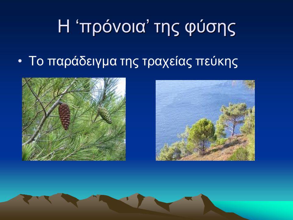 Η 'πρόνοια' της φύσης Το παράδειγμα της τραχείας πεύκης
