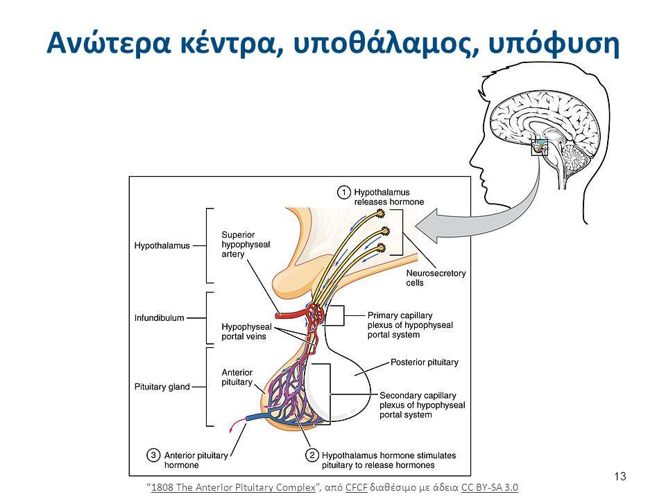 Ανώτερα κέντρα, υποθάλαμος, υπόφυση 1808 The Anterior Pituitary Complex , από CFCF διαθέσιμο με άδεια CC BY-SA 3.01808 The Anterior Pituitary ComplexCFCFCC BY-SA 3.0 13