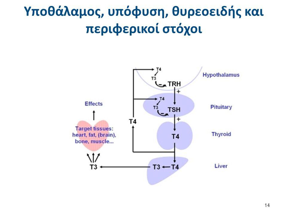 Υποθάλαμος, υπόφυση, θυρεοειδής και περιφερικοί στόχοι 14