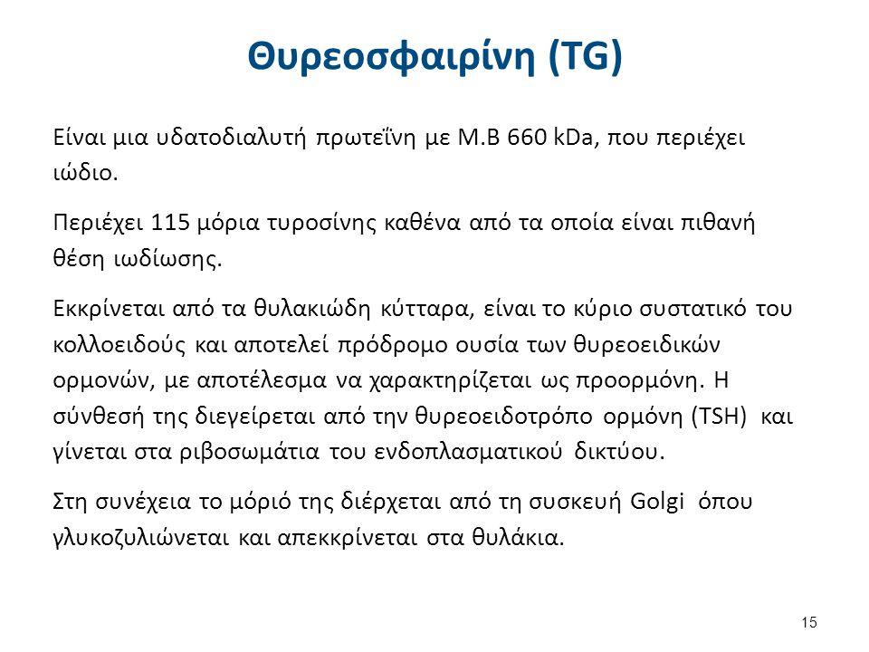 Θυρεοσφαιρίνη (TG) Είναι μια υδατοδιαλυτή πρωτεΐνη με Μ.Β 660 kDa, που περιέχει ιώδιο.
