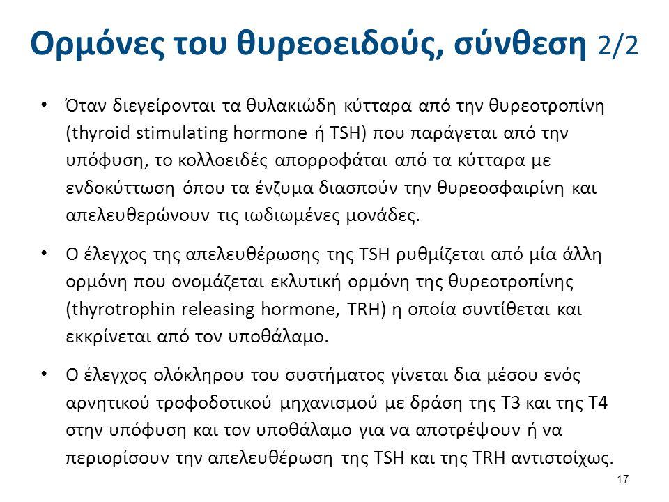 Ορμόνες του θυρεοειδούς, σύνθεση 2/2 Όταν διεγείρονται τα θυλακιώδη κύτταρα από την θυρεοτροπίνη (thyroid stimulating hormone ή TSH) που παράγεται από την υπόφυση, το κολλοειδές απορροφάται από τα κύτταρα με ενδοκύττωση όπου τα ένζυμα διασπούν την θυρεοσφαιρίνη και απελευθερώνουν τις ιωδιωμένες μονάδες.