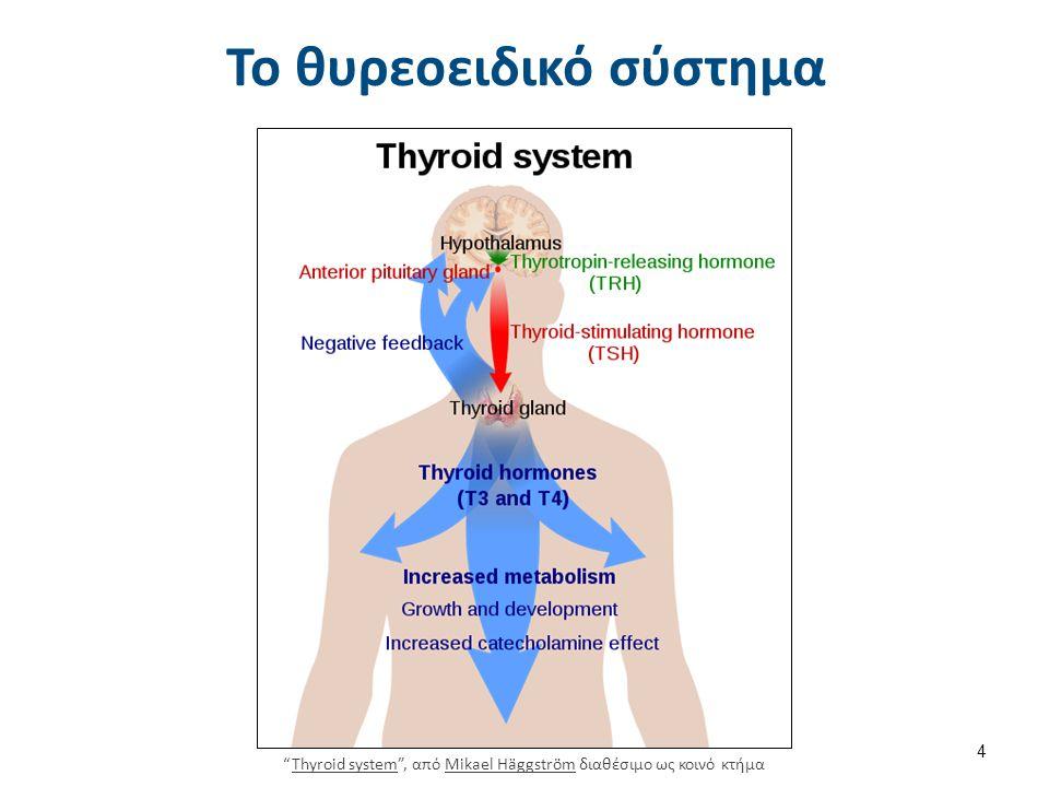 Το θυρεοειδικό σύστημα Thyroid system , από Mikael Häggström διαθέσιμο ως κοινό κτήμαThyroid systemMikael Häggström 4