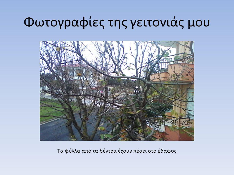 Φωτογραφίες της γειτονιάς μου Τα φύλλα από τα δέντρα έχουν πέσει στο έδαφος