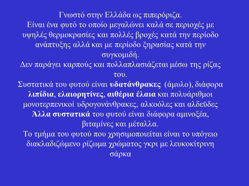 Γνωστό στην Ελλάδα ως πιπερόριζα. Είναι ένα φυτό το οποίο μεγαλώνει καλά σε περιοχές με υψηλές θερμοκρασίες και πολλές βροχές κατά την περίοδο ανάπτυξ