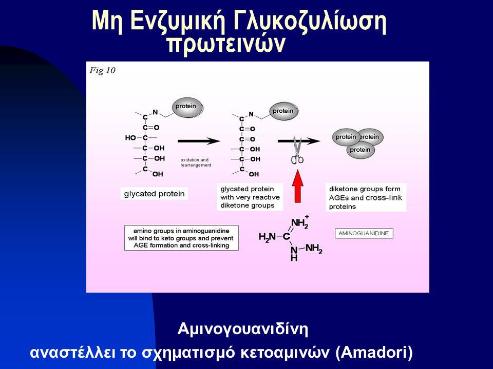 Μη Ενζυμική Γλυκοζυλίωση πρωτεινών Αμινογουανιδίνη αναστέλλει το σχηματισμό κετοαμινών (Αmadori)