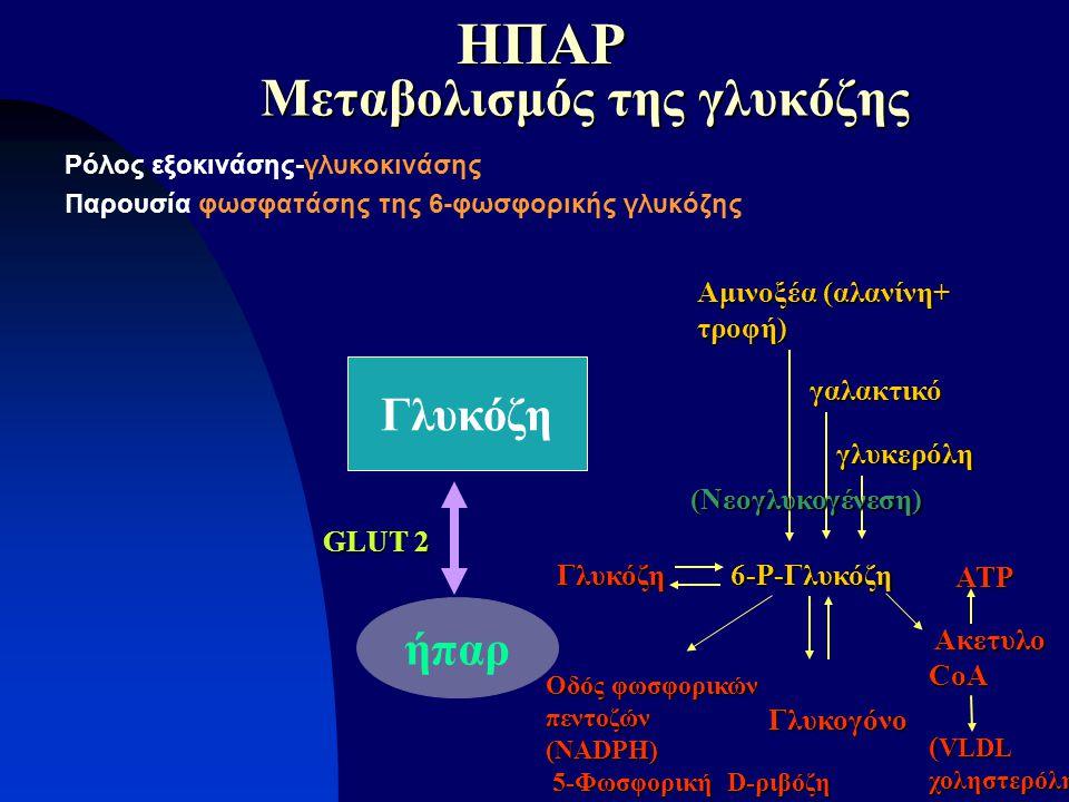 Ρόλος εξοκινάσης-γλυκοκινάσης Παρουσία φωσφατάσης της 6-φωσφορικής γλυκόζης ήπαρ Γλυκόζη Μεταβολισμός της γλυκόζης GLUT 2 Γλυκόζη 6-Ρ-Γλυκόζη Γλυκογόν