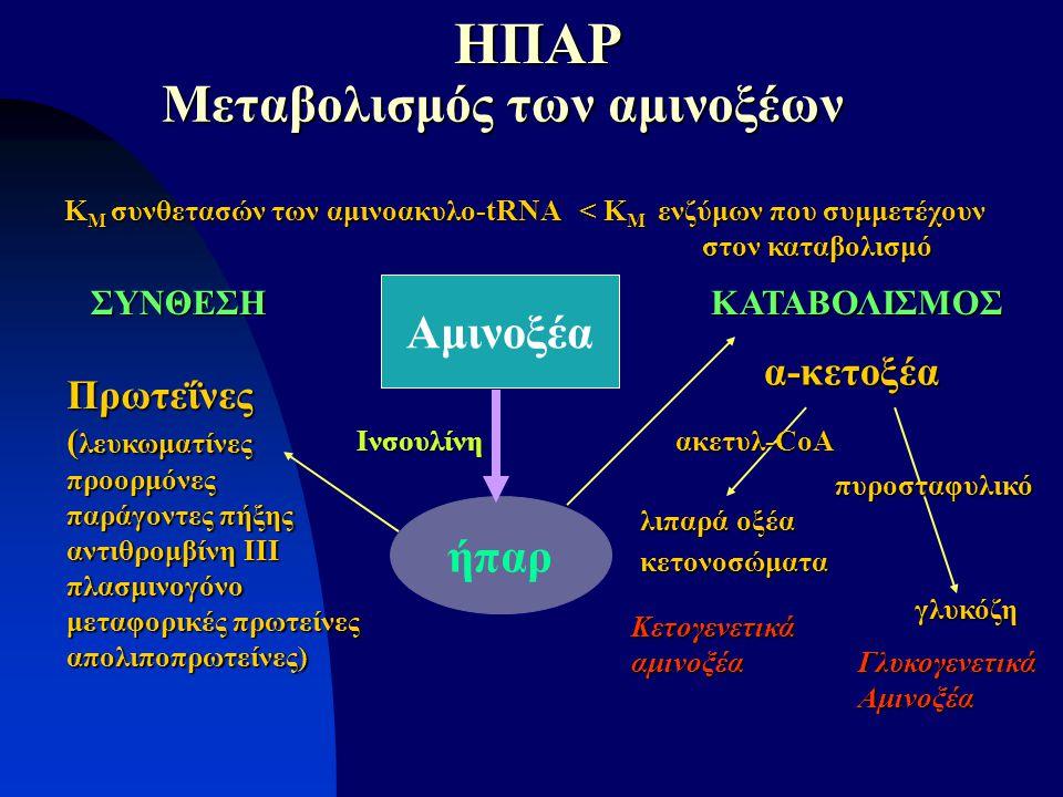 ήπαρ Αμινοξέα Μεταβολισμός των αμινοξέων Μεταβολισμός των αμινοξέων Ινσουλίνη Πρωτεΐνες ( λευκωματίνες προορμόνες παράγοντες πήξης αντιθρομβίνη ΙΙΙ πλ