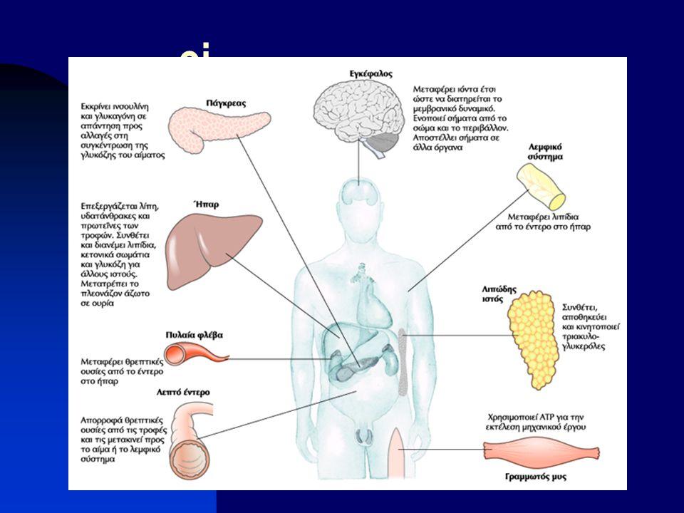 Ηπαρ : Κέντρο διανομής του σώματος Εξάγει θρεπτικές ουσίες προς άλλα όργανα Αμβλύνει τις διακυμάνσεις του μεταβολισμού Επεξεργάζεται την περίσσεια των αμινοξέων σε ουρία Αποτοξινώνει ξένες οργανικές ενώσεις (φάρμακα, προσθετικά τροφίμων συντηρητικά) Εξαρτώμενη από το κυτόχρωμα P450 υδροξυλίωση  αυξάνει η διαλυτότητά τους και έτσι η περαιτέρω αποδόμηση και απέκκρισή τους