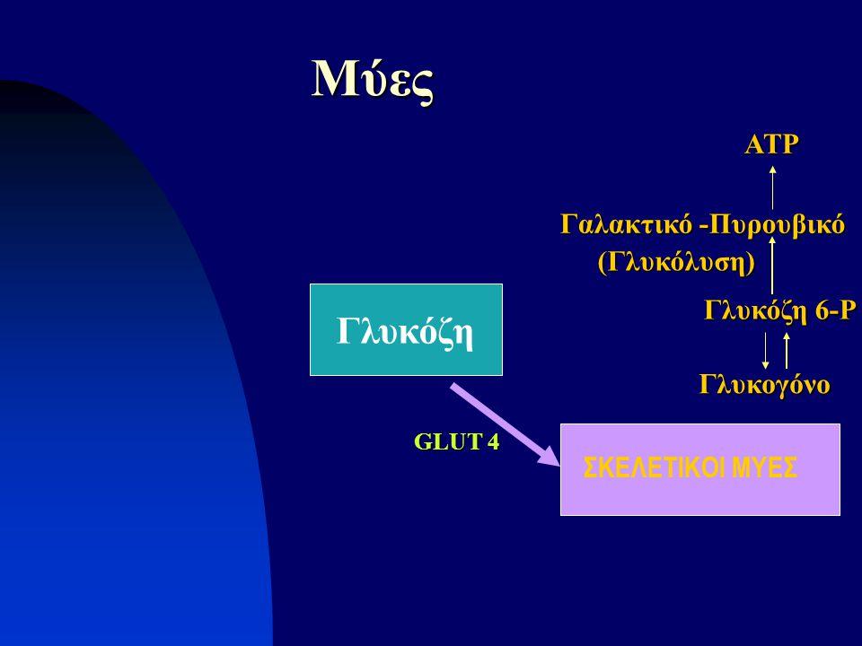 Γλυκόζη Μύες ΣΚΕΛΕΤΙΚΟΙ ΜΥΕΣ Γλυκόζη 6-P Γλυκογόνο Γαλακτικό -Πυρουβικό (Γλυκόλυση) GLUT 4 ATP