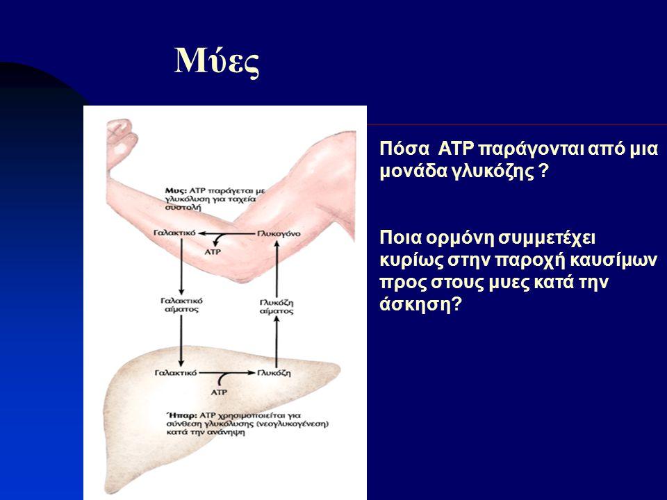Μύες Πόσα ΑΤΡ παράγονται από μια μονάδα γλυκόζης ? Ποια ορμόνη συμμετέχει κυρίως στην παροχή καυσίμων προς στους μυες κατά την άσκηση?