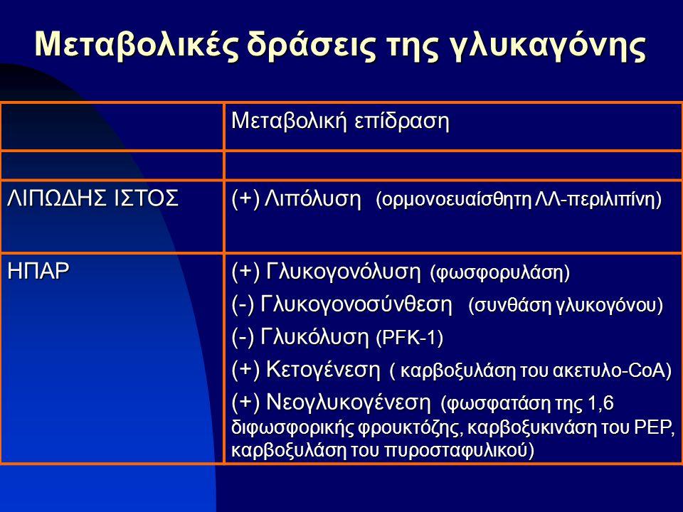Μεταβολικές δράσεις της γλυκαγόνης Μεταβολική επίδραση ΛΙΠΩΔΗΣ ΙΣΤΟΣ (+) Λιπόλυση (ορμονοευαίσθητη ΛΛ-περιλιπίνη) ΗΠΑΡ (+) Γλυκογονόλυση (φωσφορυλάση)