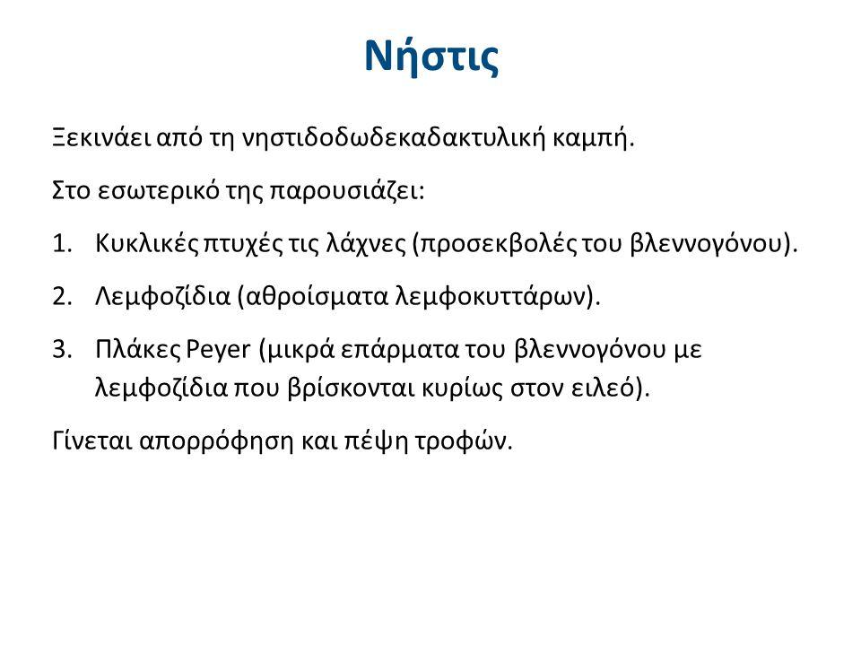 Νήστις Ξεκινάει από τη νηστιδοδωδεκαδακτυλική καμπή. Στο εσωτερικό της παρουσιάζει: 1.Κυκλικές πτυχές τις λάχνες (προσεκβολές του βλεννογόνου). 2.Λεμφ