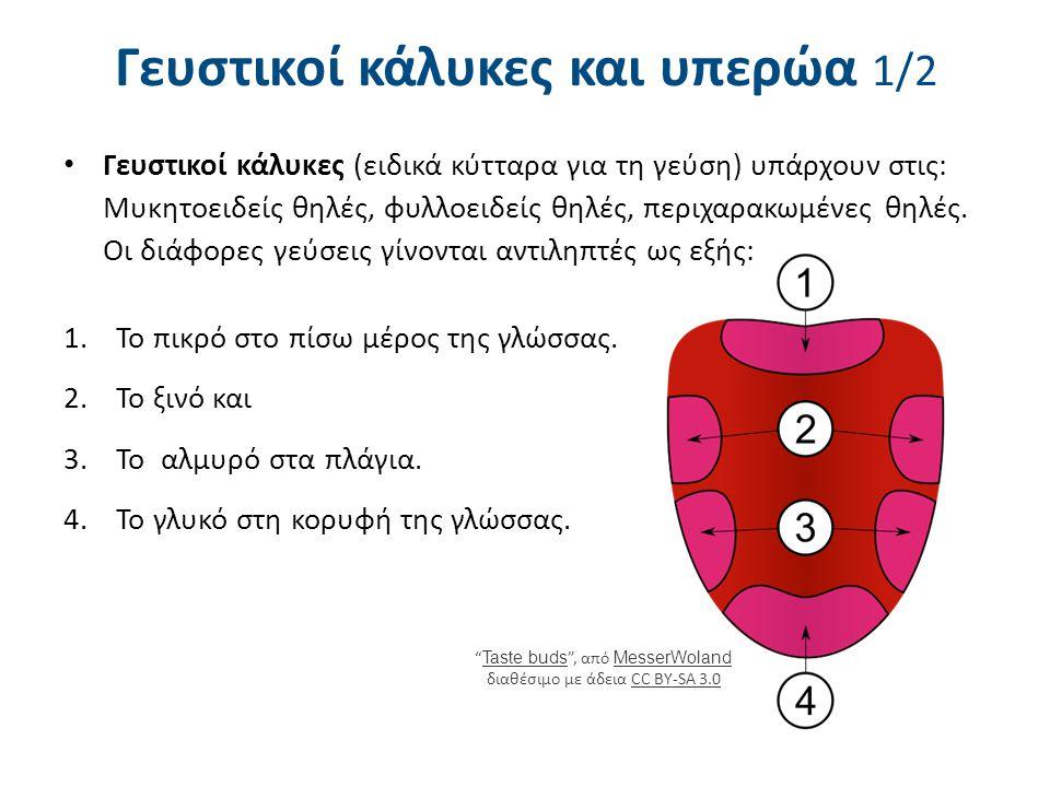 Σκωληκοειδής απόφυση Βρίσκεται στο τυφλό έντερο 2-3 εκ.