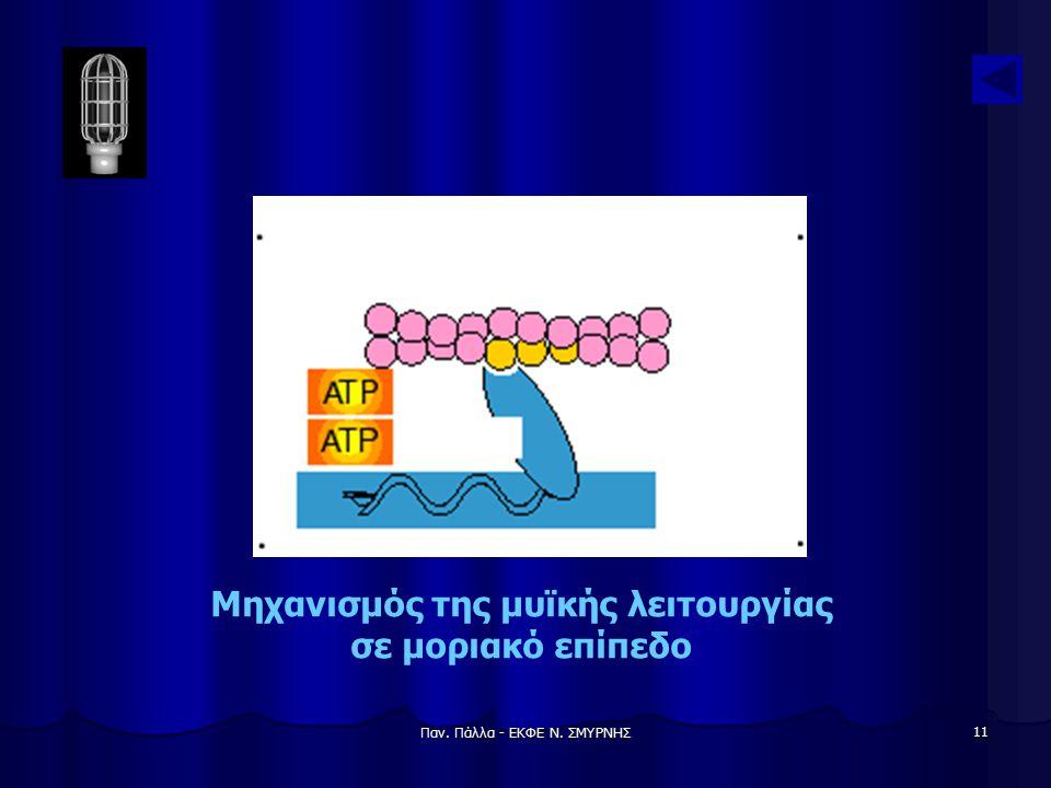 Παν. Πάλλα - ΕΚΦΕ Ν. ΣΜΥΡΝΗΣ 11 Μηχανισμός της μυϊκής λειτουργίας σε μοριακό επίπεδο
