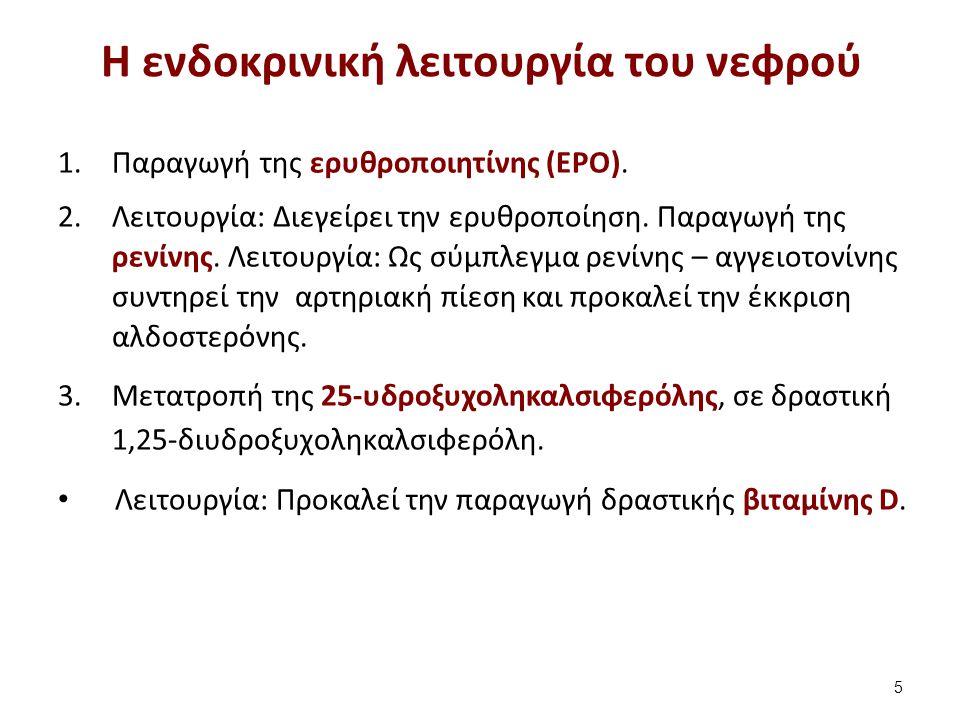 Η ενδοκρινική λειτουργία του νεφρού 1.Παραγωγή της ερυθροποιητίνης (EPO). 2.Λειτουργία: Διεγείρει την ερυθροποίηση. Παραγωγή της ρενίνης. Λειτουργία: