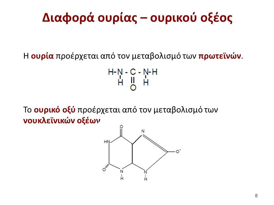 Η ουρία προέρχεται από τον μεταβολισμό των πρωτεϊνών. Το ουρικό οξύ προέρχεται από τον μεταβολισμό των νουκλεϊνικών οξέων. Διαφορά ουρίας – ουρικού οξ