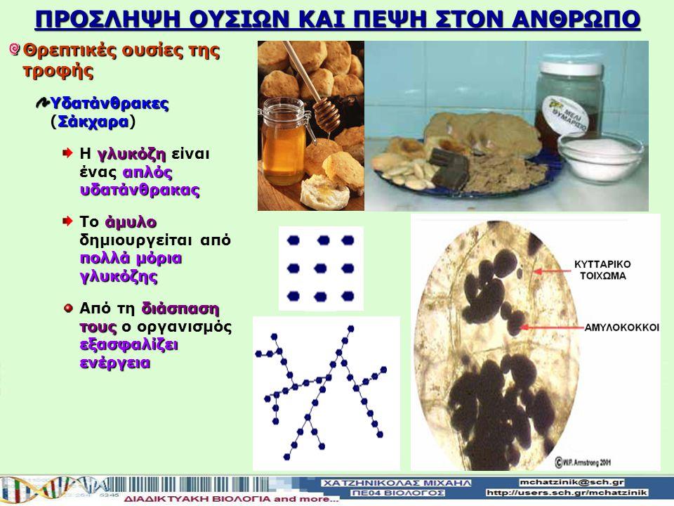 ΠΡΟΣΛΗΨΗ ΟΥΣΙΩΝ ΚΑΙ ΠΕΨΗ ΣΤOΝ ΑΝΘΡΩΠΟ Θρεπτικές ουσίες της τροφής Υδατάνθρακες Σάκχαρα Υδατάνθρακες (Σάκχαρα) γλυκόζη απλός υδατάνθρακας Η γλυκόζη είναι ένας απλός υδατάνθρακας άμυλο πολλά μόρια γλυκόζης Το άμυλο δημιουργείται από πολλά μόρια γλυκόζης διάσπαση τους εξασφαλίζει ενέργεια Από τη διάσπαση τους ο οργανισμός εξασφαλίζει ενέργεια