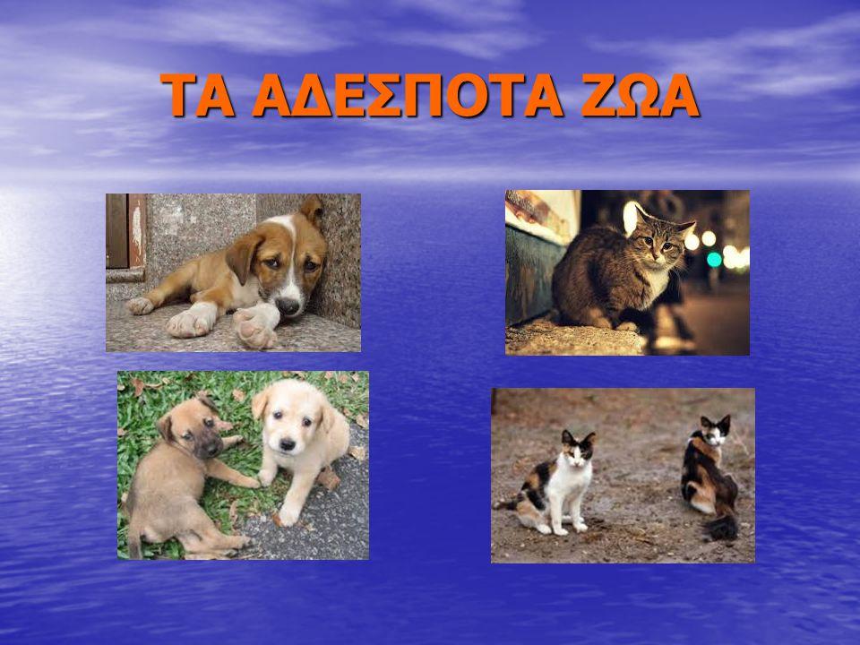 ΤΙ ΕΙΝΑΙ ΑΔΕΣΠΟΤΟ Τα αδέσποτα ζώα είναι κάποια ζώα (σκυλιά, γάτες), που είναι παρατημένα από τα αφεντικά τους.