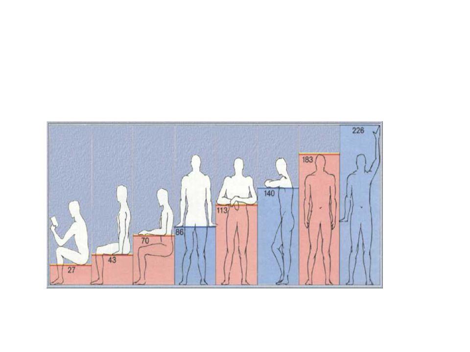 Ένας άνθρωπος ύψους 1,83μ., με το χέρι σηκωμένο(σε ένα ύψος 2,26μ.) είναι εγγεγραμμένο σε ένα τετράγωνο. Ο λόγος του ύψους του άνδρα (1,83μ) προς το ύ