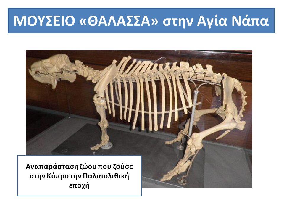 ΜΟΥΣΕΙΟ «ΘΑΛΑΣΣΑ» στην Αγία Νάπα Αναπαράσταση ζώου που ζούσε στην Κύπρο την Παλαιολιθική εποχή