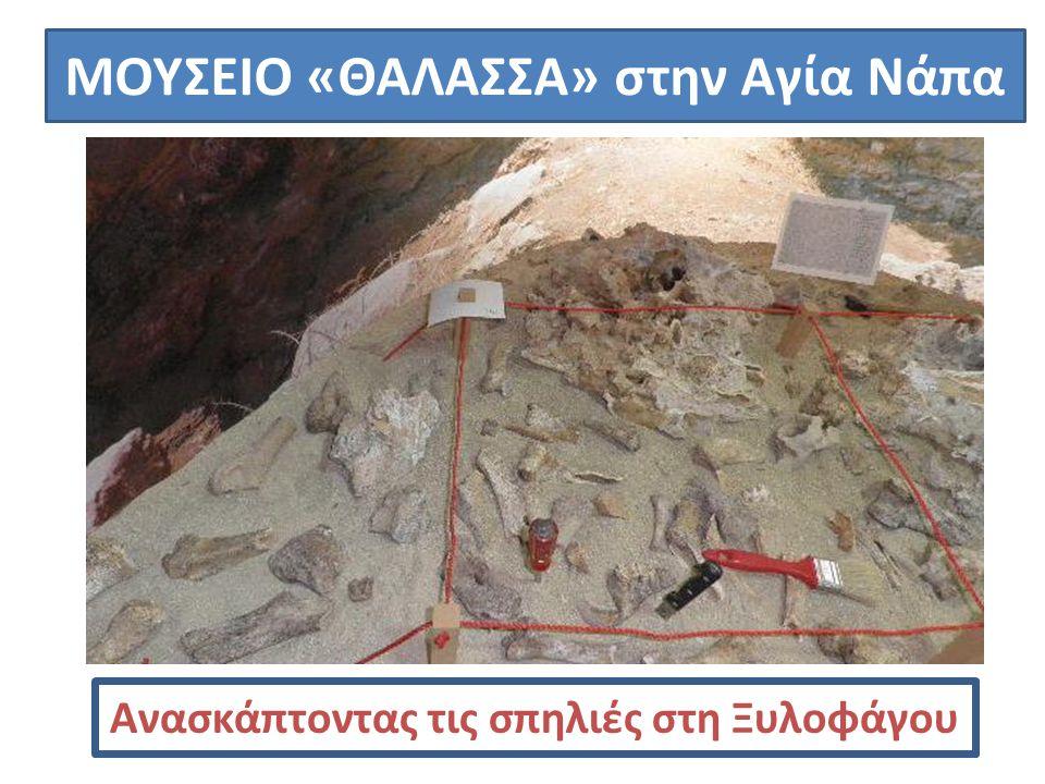 ΜΟΥΣΕΙΟ «ΘΑΛΑΣΣΑ» στην Αγία Νάπα Ανασκάπτοντας τις σπηλιές στη Ξυλοφάγου